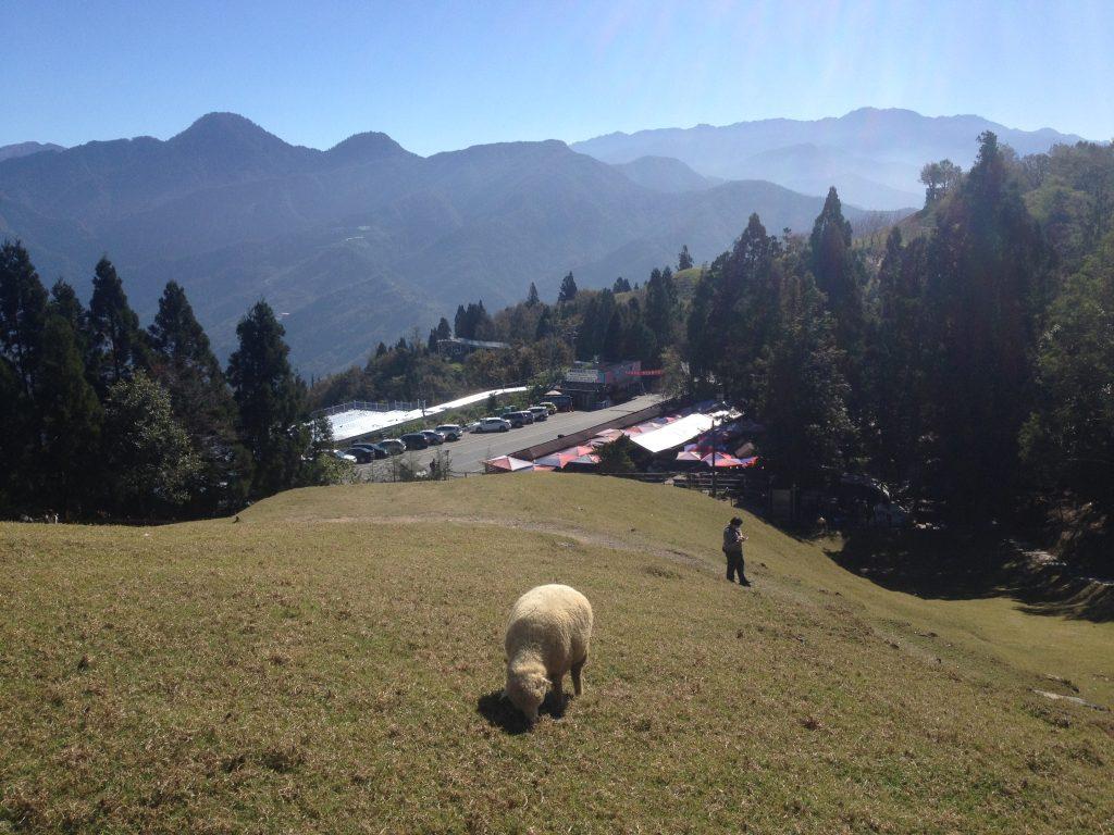 Qingjing sheep farm